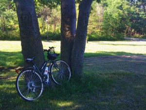 Bike leaning against a tree