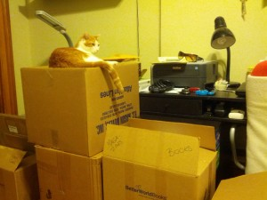 Cat sitting atop packing boxes